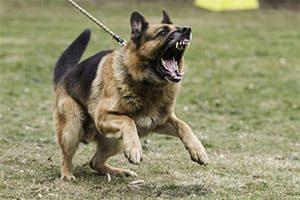 Handling Aggressive Behavior Mindset