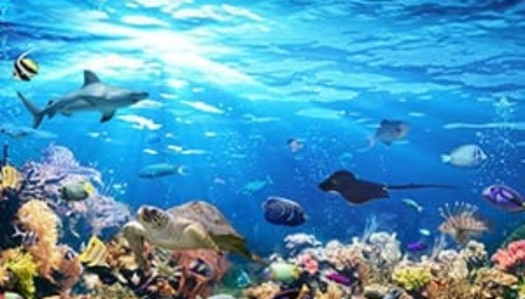 Ride Under the Ocean