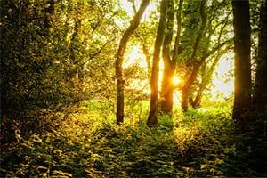 harmony-nature